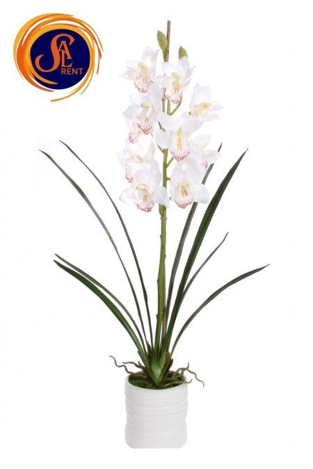 Орхидея Цимбидиум (90 см)