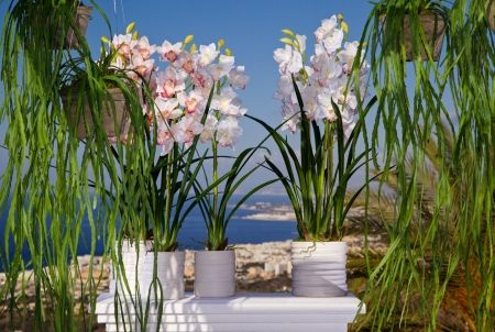 Искусственная орхидея Цимбидиум (высота — 1 м)