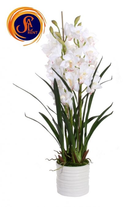 Орхидея Цимбидиум (1 м)