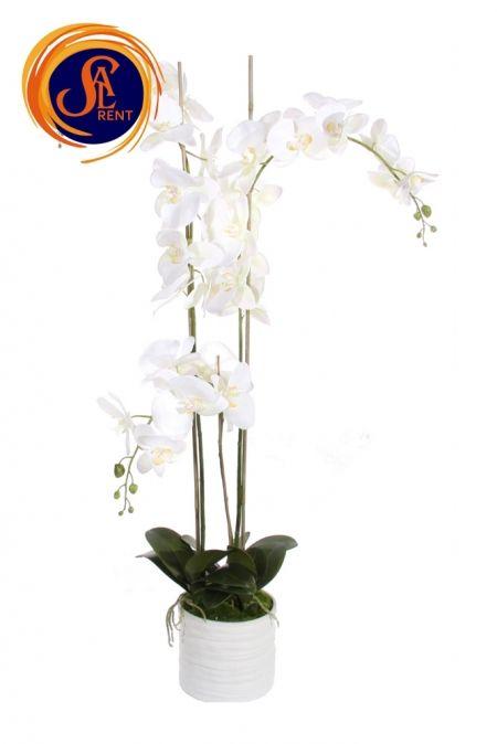 Орхидея в горшке (1,4 м)