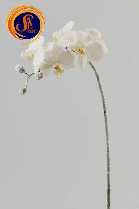 Орхидея, ветка заснеженная