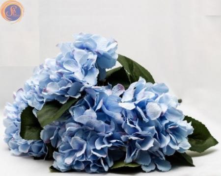 Гортензия синяя куст