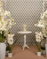 Нежная орхидея