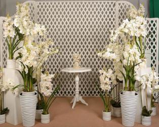 Фотозона Орхидея