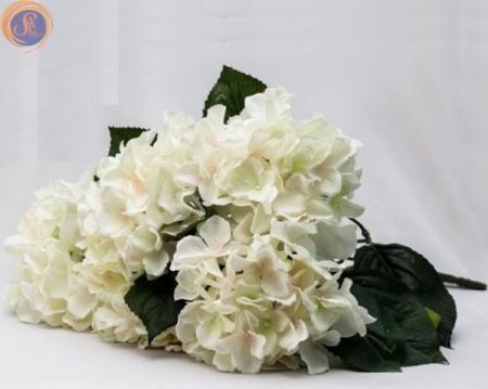 Гортензия белая куст